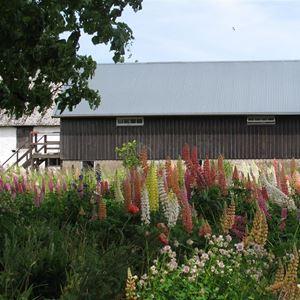 Bild på Blomsterhavet utanför ateljén
